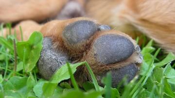 07-07-2017 14:44 Pies przywiązany do drzewa z łapami związanymi taśmą. Trwają poszukiwania sprawcy