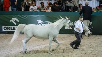Dymisja wiceprezesa ANR po aukcji koni arabskich w Janowie Podlaskim.
