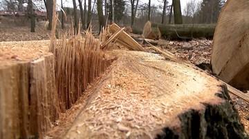 """22-02-2017 17:01 """"Kto miał wpływ na ustawę ws. wycinki drzew"""". Nowoczesna pyta CBA"""