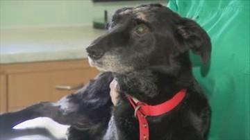 Kara bezwzględnego więzienia za skatowanie psa. Wyrok ws. kundelka Wiktora