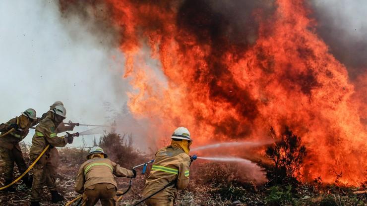 Rząd ogłosił trzydniową żałobę po pożarze w Leirii