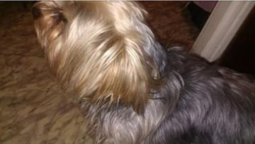 Skradziono psa chłopca z zespołem Aspergera. Szczęśliwy finał sprawy