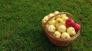 """Ceny skupu jabłek nadal niskie. """"Producenci krzywią się"""""""