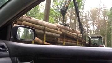 Nakaz wstrzymania wycinki drzew w Puszczy Białowieskiej, a drwale tną