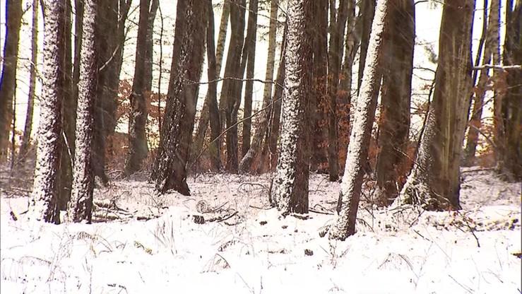 Na północy wiosna zmieni się w zimę. Idzie mróz i śnieg