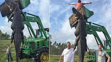 06-04-2016 11:50 Aligator-gigant zastrzelony na Florydzie. Ważył prawie 400 kilogramów