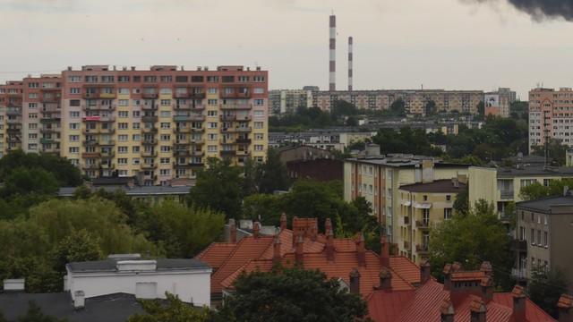 Słowacki Tulipan omotał Polkę - wyłudził kosmiczną sumę