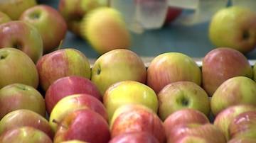 08-09-2016 07:40 Szwecja: 19 ton polskich jabłek wycofano ze sprzedaży