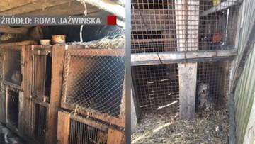 Psy gnieździły się w klatkach dla królików, jadły padlinę. Zlikwidowano dwie pseudohodowle w Wielkopolsce