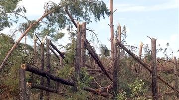 MRiRW: ok. 8,5 tys. gospodarstw i 72 tys. ha upraw zniszczonych przez nawałnice