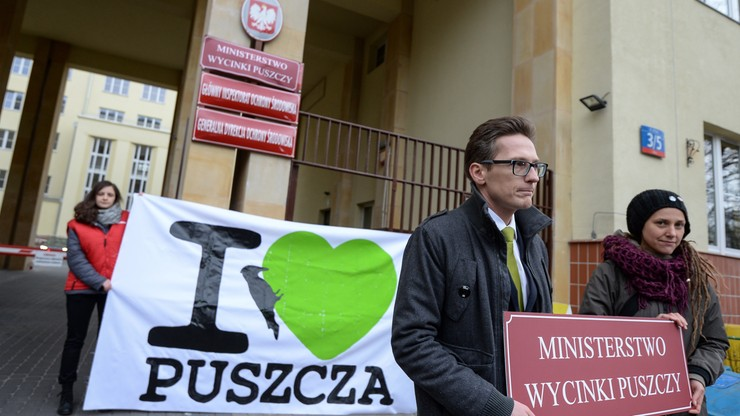 """Minister zwiększa wycinkę drzew w Puszczy Białowieskiej. """"To wyrok na puszczę"""" - alarmują organizacje"""