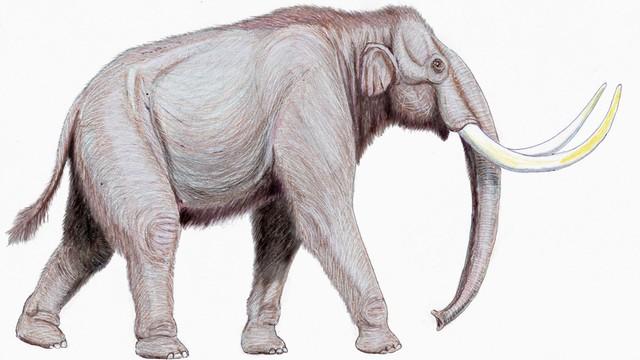 Żywe mamuty już za dwa lata. Naukowcy przywrócą do życia wymarły przed tysiącami lat gatunek