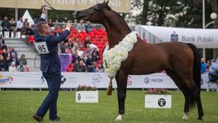 Zwolnieni ze stadnin przez PiS organizują własną aukcję koni - będą słynni hodowcy, którzy nie dotarli do Janowa