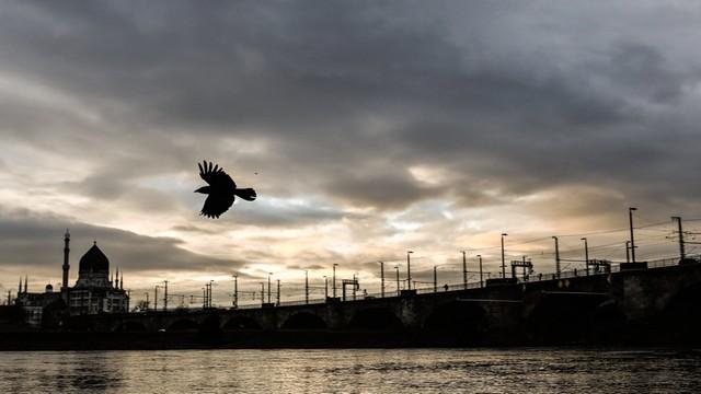 Ptaki pozostające w Polsce na zimę to coraz powszechniejsze zjawisko