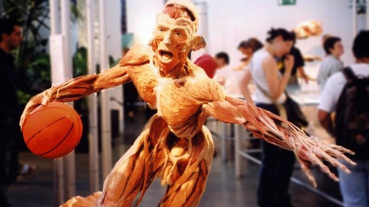 Popyt na spreparowane ludzkie ciała stale rośnie