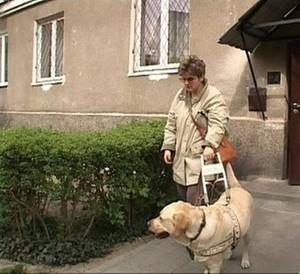 Bilet dla psa asystenta