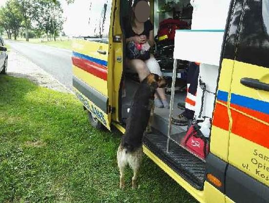 Po wypadku pies podszedł do poszkodowanej kobiety, która siedziała w karetce.