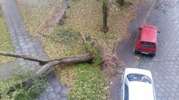 2017-10-29 Silny wiatr powalił drzewo przy ul. Parkowej w Nysie (Opolskie)