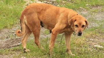 10-08-2016 19:06 Sąd po stronie weterynarza ukaranego za niesienie pomocy zwierzętom