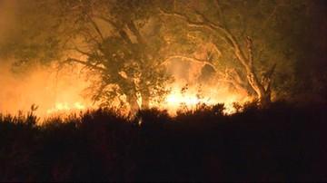 Rekordowe upały w Kalifornii. Odnotowano 17 pożarów lasów