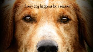 20-01-2017 14:00 Dręczyli psa na planie filmu. PETA bojkotuje obraz, premiera przesunięta