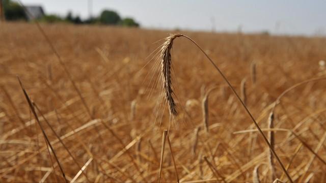 Rolniczy związkowcy apelują o wprowadzenie stanu klęski suszy