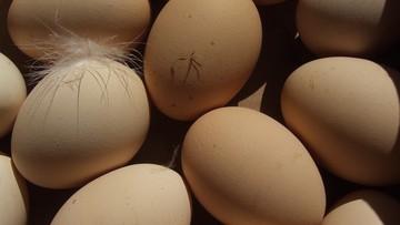 Ministerstwo Rolnictwa: na polskim rynku nie ma jaj zakażonych salmonellą