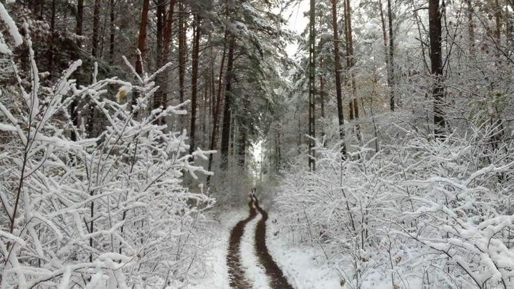2016-11-11 Bemowo Piskie (woj. warmińsko-mazurskie) - bajkowy widok lasu przyprószonego śniegiem