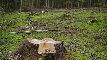 """07-07-2017 09:54 Premier o nakazie UNESCO dot. zaprzestania wycinki w Puszczy Białowieskiej. """"Nie ma takiej decyzji"""""""