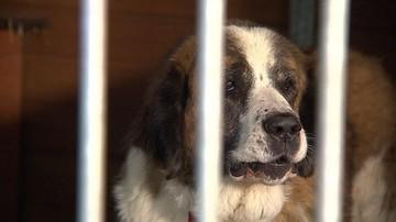 Płacą nawet 800 zł za adopcję psa. Chętnych niewielu