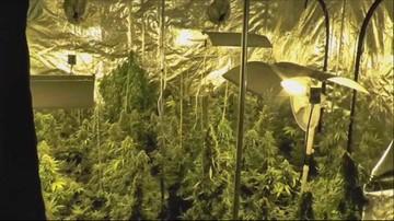 15-02-2016 11:06 Zlikwidowano wielką plantację marihuany