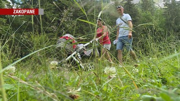 Uwaga na żmije w Tatrach. Odnotowano pierwsze przypadki ukąszeń