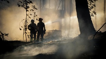 16-07-2017 17:13 Pożary lasów w Chorwacji i Czarnogórze