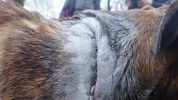 09-03-2016 20:38 Sprawca bestialskiego pobicia psa zatrzymany. To konkubent właścicielki