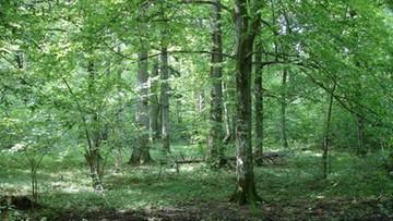 21-08-2017 12:03 Gliński: Puszcza Białowieska powinna być sanktuarium przyrodniczym