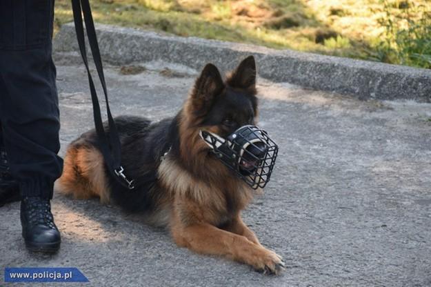 Ibej najlepszym psem patrolowo-tropiącym w Polsce. Zakończyły się XVI kynologiczne mistrzostwa policji