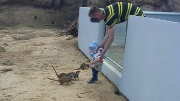 """07-05-2017 07:04 Włożył dziecko do wybiegu dla zwierząt w zoo w Zamościu. Ogród publikuje zdjęcie """"myślącego inaczej"""""""