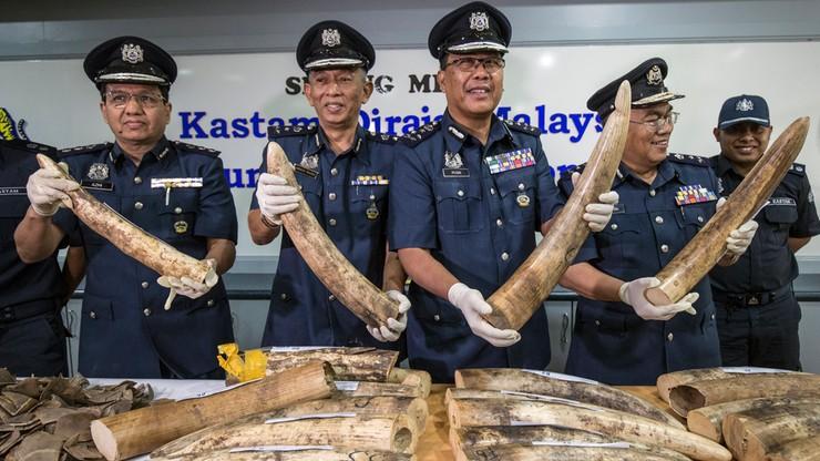 23 kły słoni i 300 kg łusek pangolinów. W Malezji skonfiskowano ładunek warty ok. 1 mln dolarów