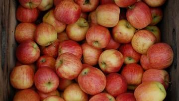12-01-2018 17:17 Jabłka w cenie mandarynek. Sadownicy zapowiadają, że będzie jeszcze drożej