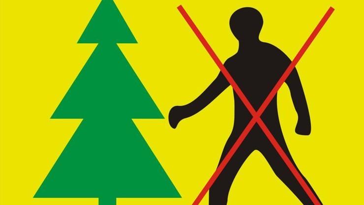 """Ogłoszono zakaz wstępu do części Puszczy Białowieskiej. """"Martwe drzewa zagrażają bezpieczeństwu"""""""