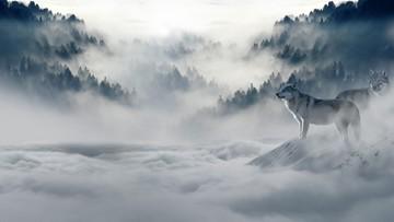 19-09-2016 17:38 Rzeź wilków w Norwegii. Zabiją 47 z 68 żyjących tam sztuk