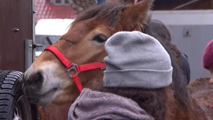 """Udało się wykupić ponad 100 koni, które miały trafić do rzeźni. Koniec Jarmarku """"Wstępy"""""""