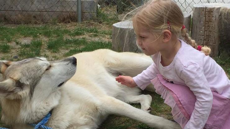 """Pies-terapeuta zabity przez myśliwego. """"Wziął go za wilka"""""""