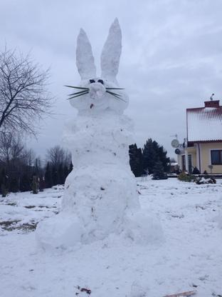 2016-12-25 Bożonarodzeniowy... zając z Podkarpacia