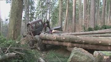 Puszcza Białowieska: leśnicy chcą wycinać świerki, ekolodzy: to koniec ochrony