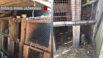 16-06-2017 20:07 Psy gnieździły się w klatkach dla królików, jadły padlinę. Zlikwidowano dwie pseudohodowle w Wielkopolsce