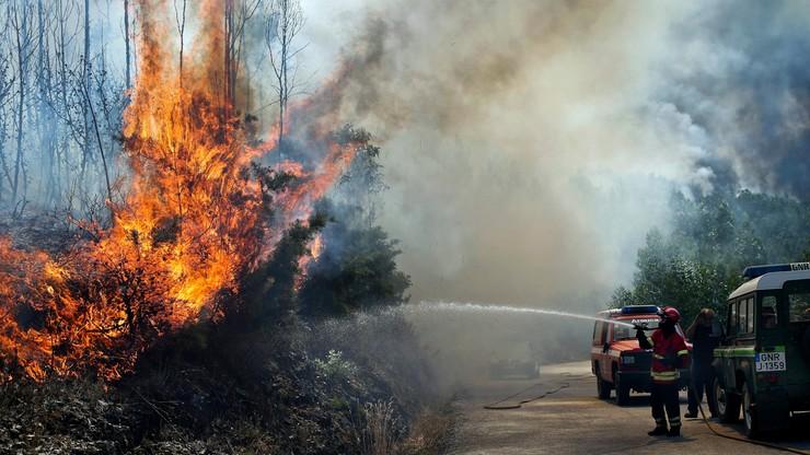 Pożary lasów na Maderze. Zatrzymano mężczyznę podejrzanego o wzniecenie ognia