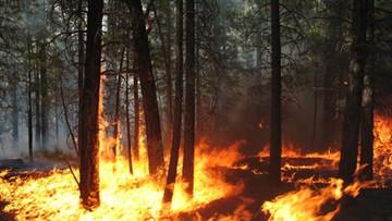 26-05-2016 09:39 970 pożarów lasów w maju. Strażacy apelują o rozwagę
