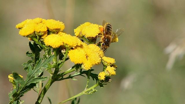 Włochy: armia pszczół pomoże walczyć z terrorystami?