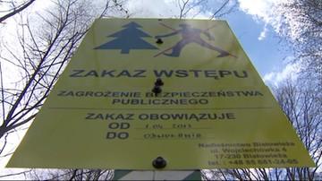 2017-04-24 Puszcza Białowieska zamknięta. Przedsiębiorcy piszą list do rządu